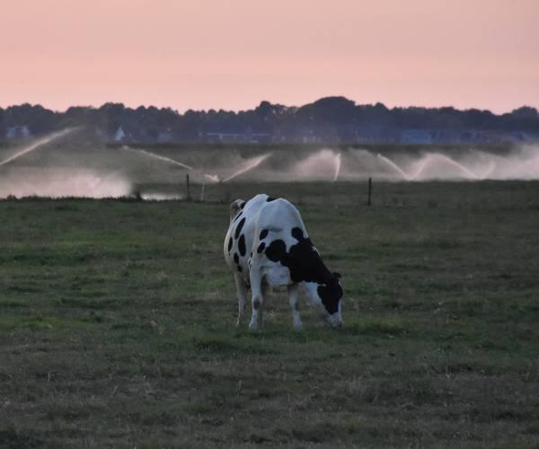 Wetterskip Fryslân roept op: 'Ga verstandig om met water'