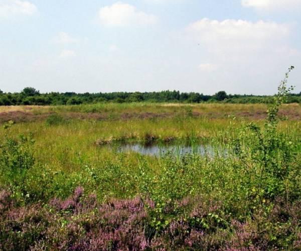 Met It Fryske Gea op excursie door de Friese natuur.