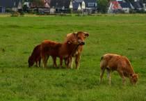 Boeren en tuinders: geniet van ons landschap in Noord-Nederland