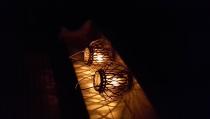 Nacht van de Nacht Woudsend met sterrenkundige en schrijfster
