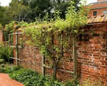 Uitstraling geven aan je tuin door middel van een boom