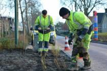 Planten nieuwe bomen en struiken door SWF